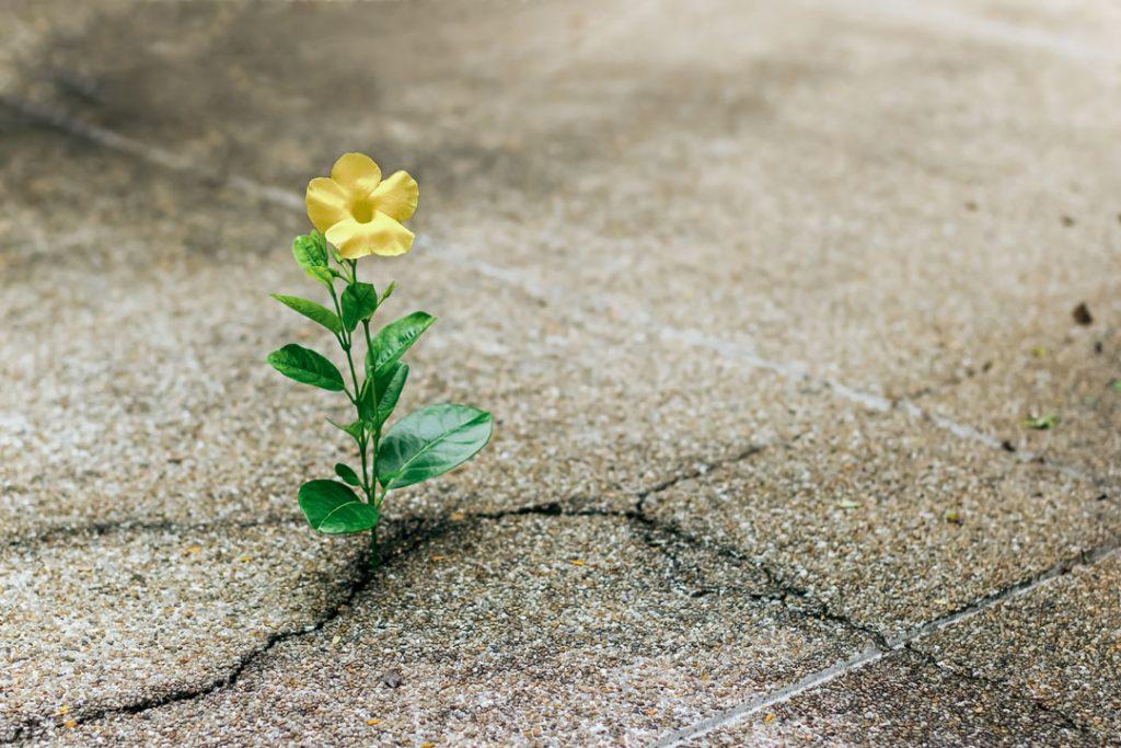 optimistic-н зурган илэрц